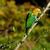 Todas las fotos tomadas de Parques Naturales de Colombia por Ingrid Paola Jurado Rivera