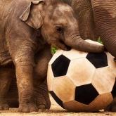 "Documental recomendado: ""An Apology to Elephants"""