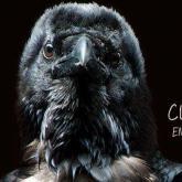 """""""Cuervos en la cuerda"""", lo nuevo de Revólver Plateado"""