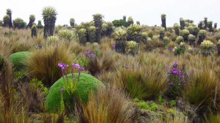 El Instituto Humboldt celebra el Día Internacional de la Diversidad Biológica