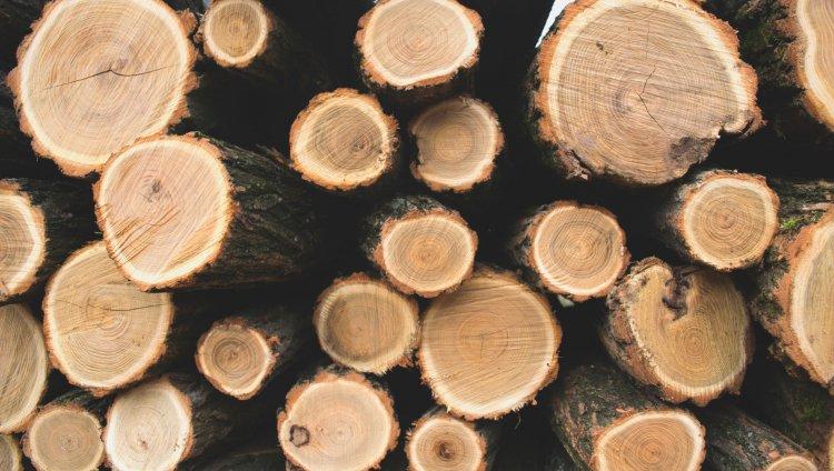 Troncos de árboles cortados. Foto de Unsplash.