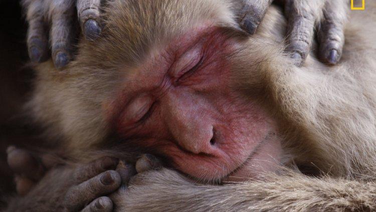 'Macaque Maintenace', una de las menciones de honor. Foto: Lance MCMillan