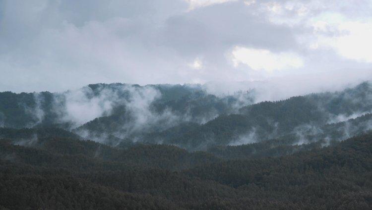 """Fotos: Captura extraídas del documental """"Verde colo el oro""""// Foto del oso de anteojos: Petruss"""