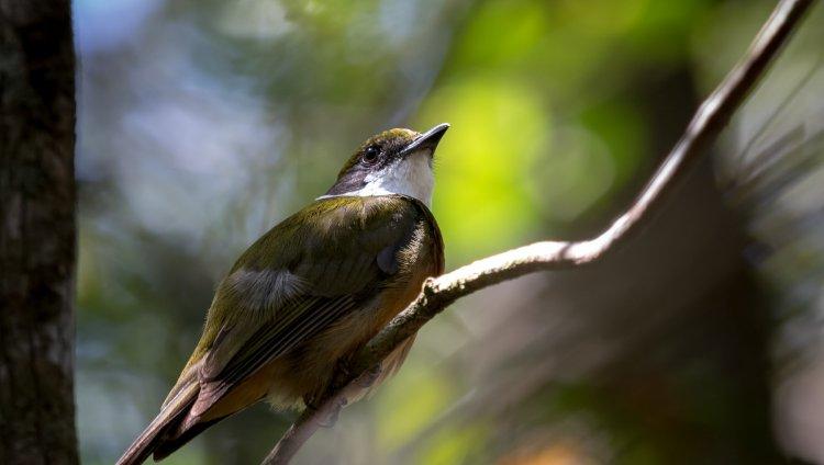 Foto cortesía del Instituto Humboldt.