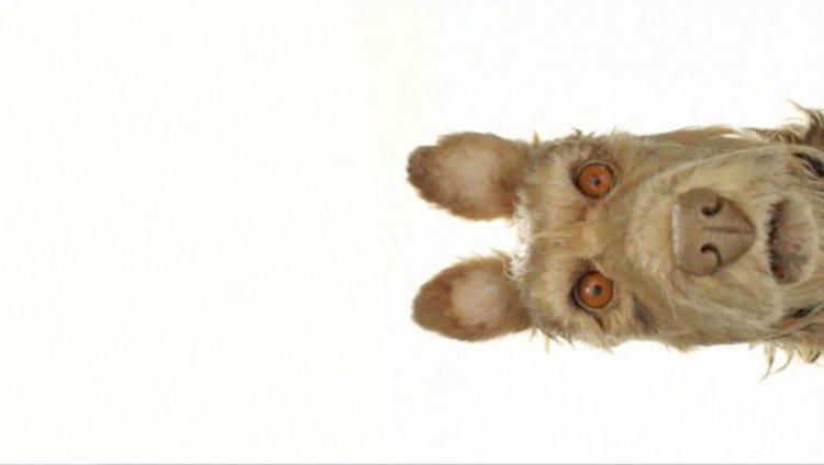 Bill Murray es un perro en la nueva película de Wes Anderson