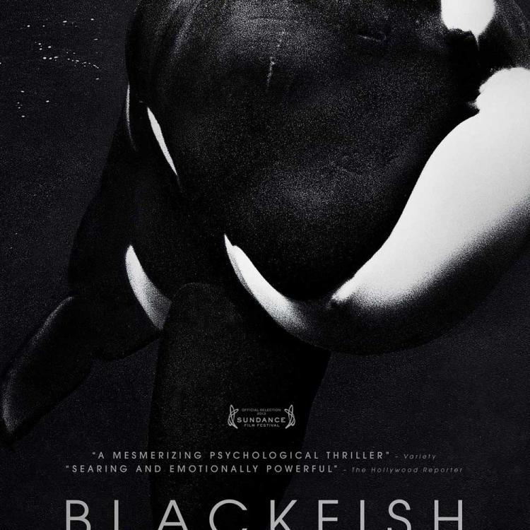 BLACKFISH (GABRIELA COWPERTHWAITE, 2013)