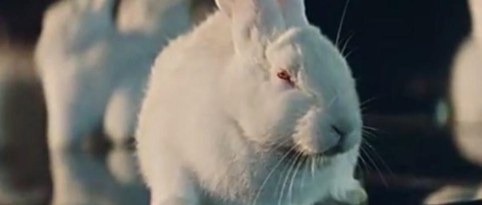 Conejos, carros y crímen en el nuevo vídeo de Royal Blood: How Did We Get So Dark?